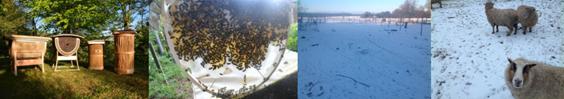 Bienen, Bäume und Bauwägen