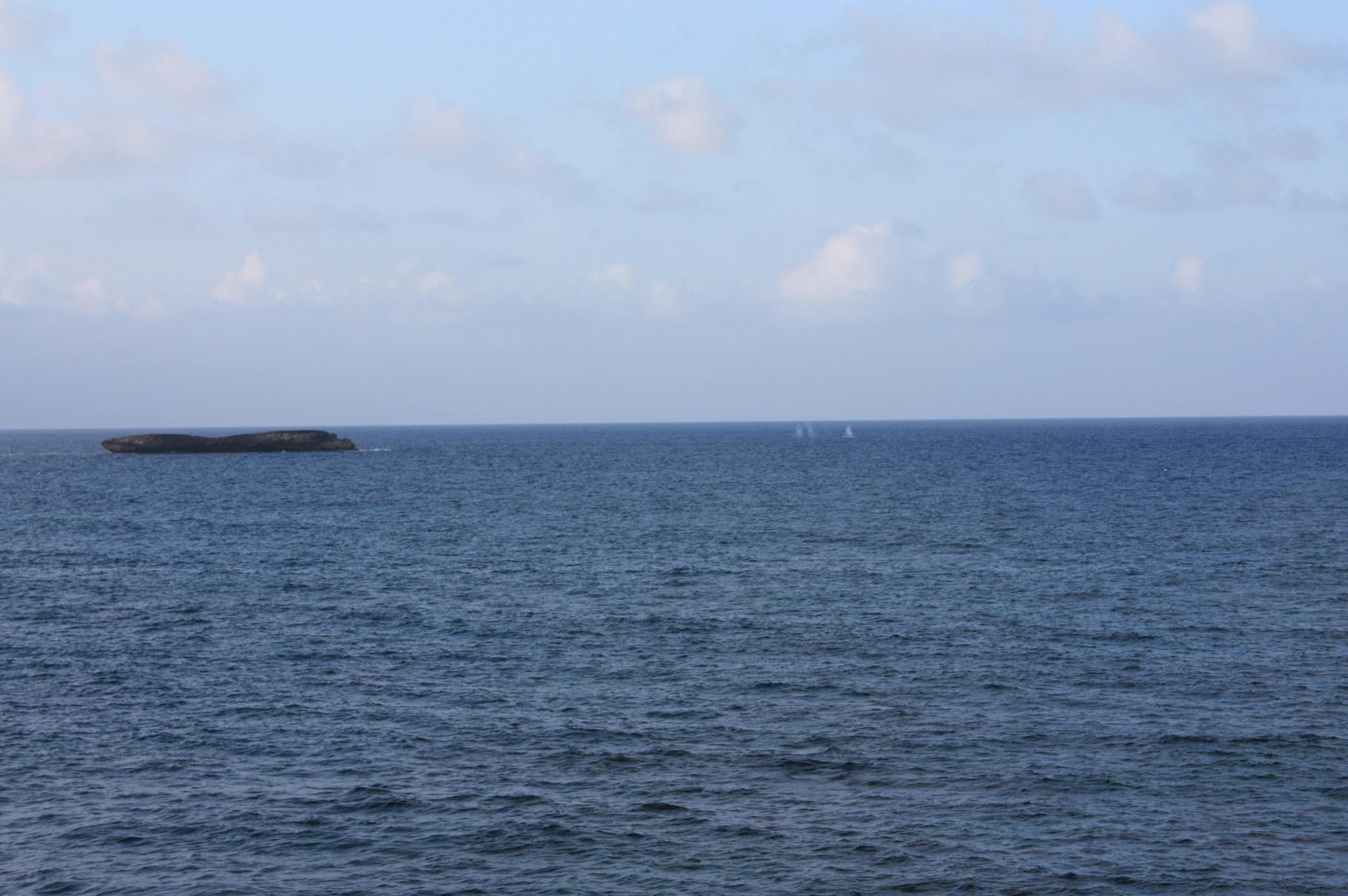 季節外れなのに、クジラが見えた!!すごい~