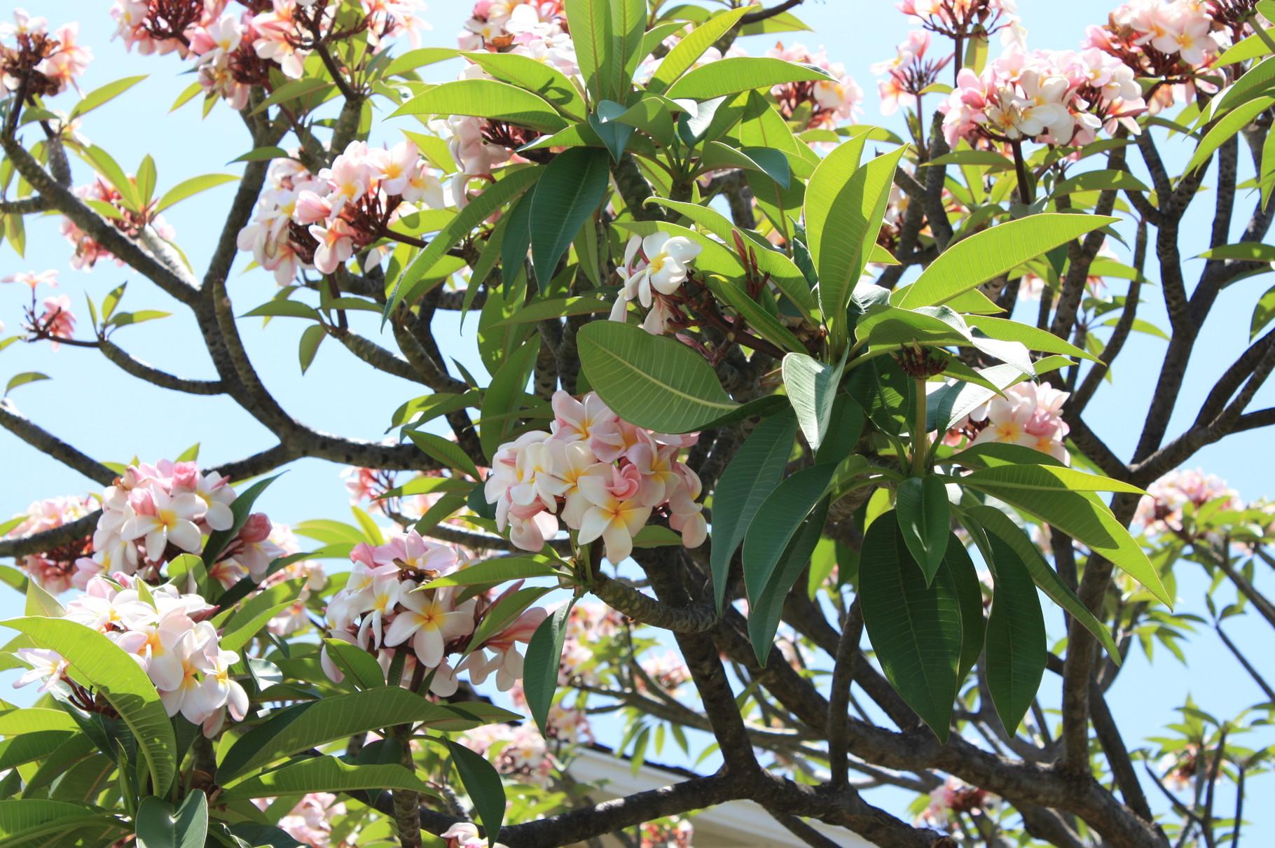 ハワイはどこにいっても、花が見ていてくれる…