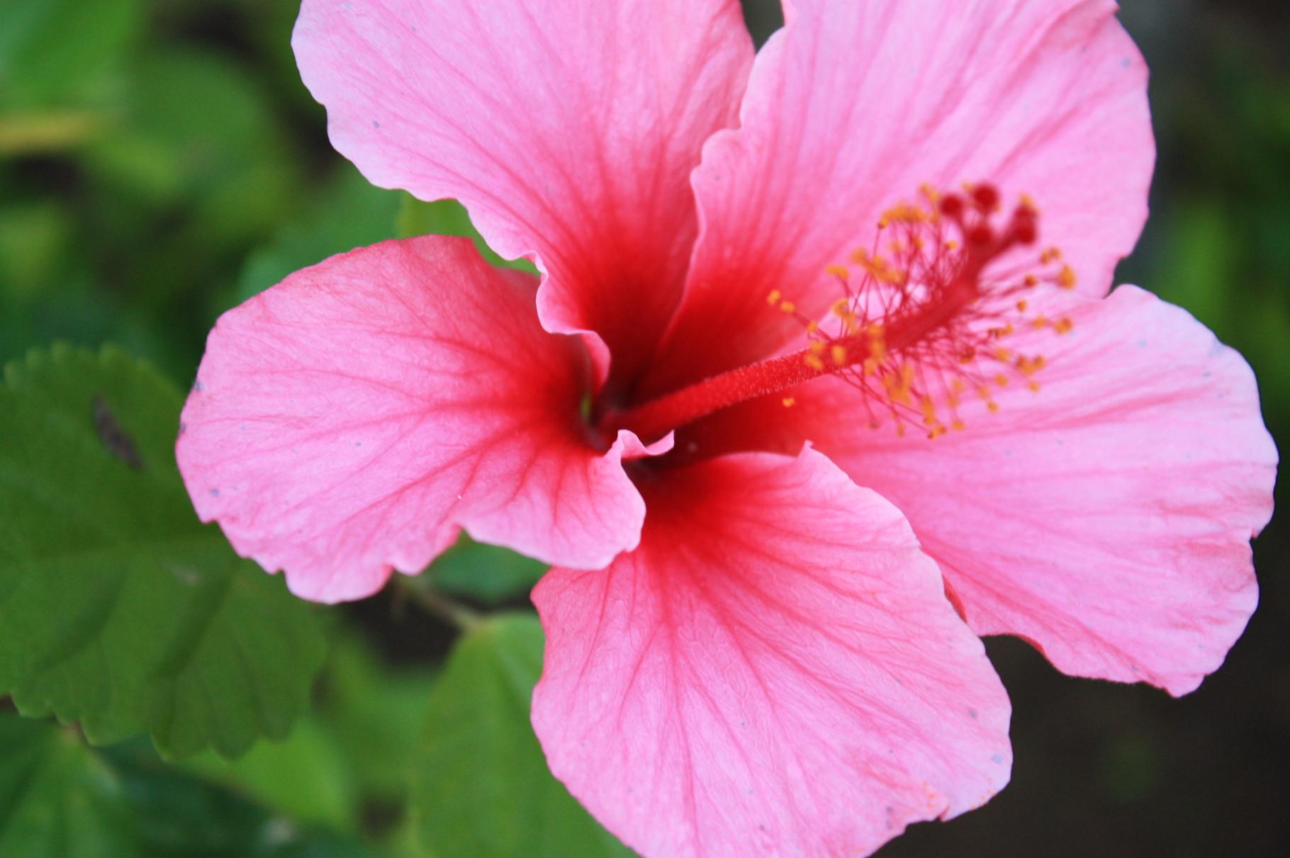 ハワイをきっかけに、大きく自分を咲かせよう!