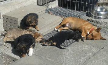 Hundemutter mit ihren Welpen