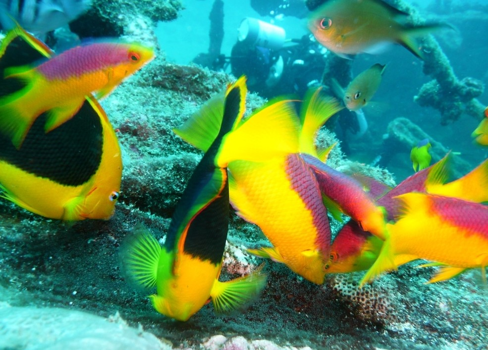 Fische, Recife, 20.11.2009
