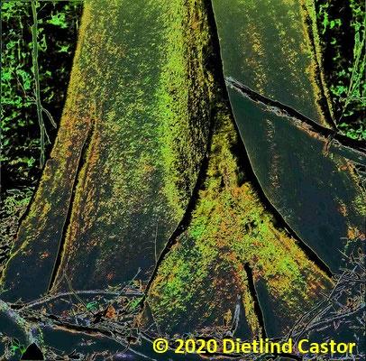Wurzeln © 2020 Dietlind Castor