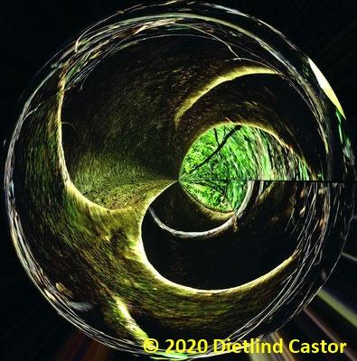 Wurzel © 2020 Dietlind Castor