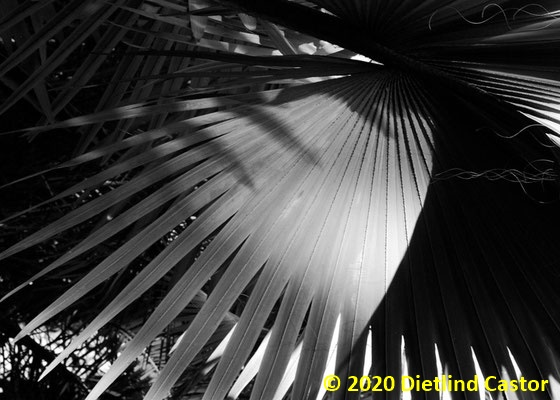 Marrakech Majorelle Garten © 2020 Dietlind Castor