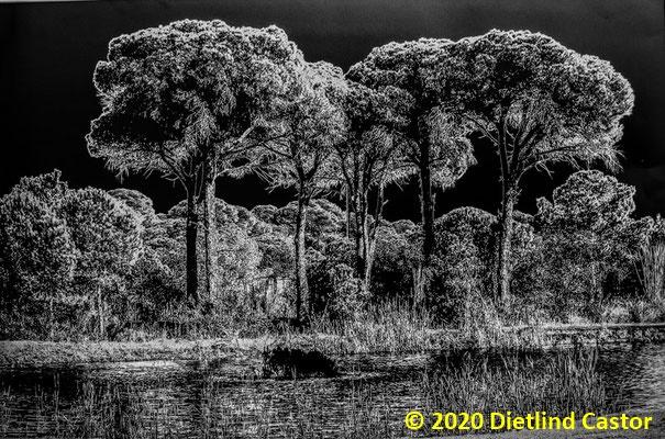 Zauberwald  © 2020 Dietlind Castor