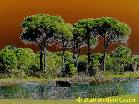 Fantastische Bäume © 2020 Dietlind Castor