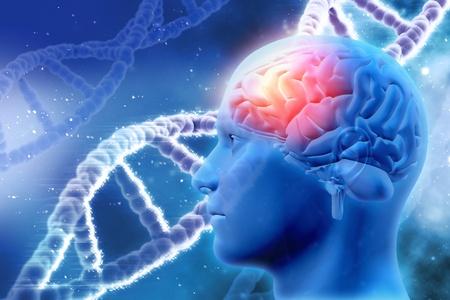 Festplatte Gehirn,