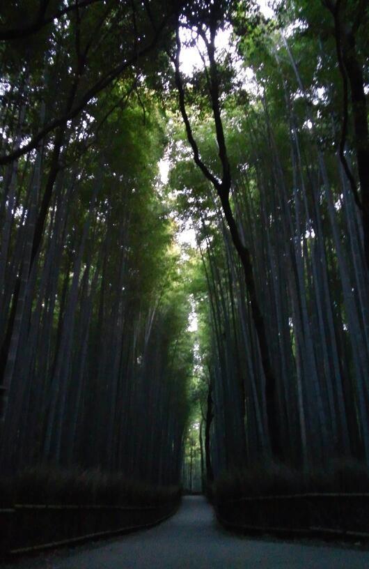 (竹林の道)
