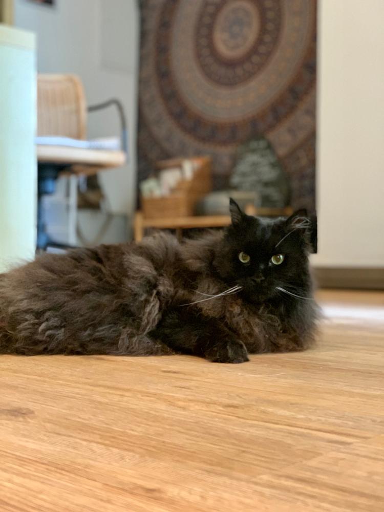 Katze Luna sucht sich selbst den Platz aus, wo sie ihre Bioresonanz Therapie bekommen möchte