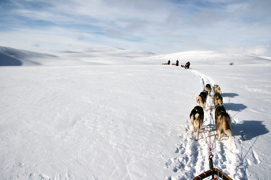 Husky Expedition durchs Naturreservat