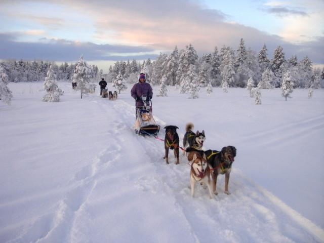 Lapplands unendliche Weiten auf Huskytour erleben