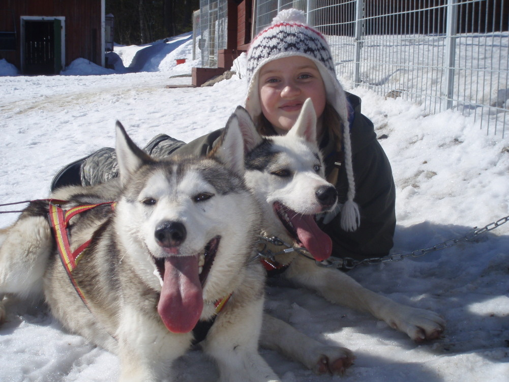 Kuscheln mit unseren sibirischen Huskies