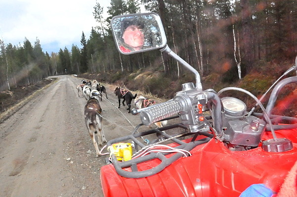 Husky Training in Lappland