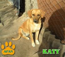 katy-perrita-adopcion