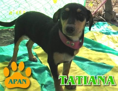 tatiana-perrita-en-adopcion