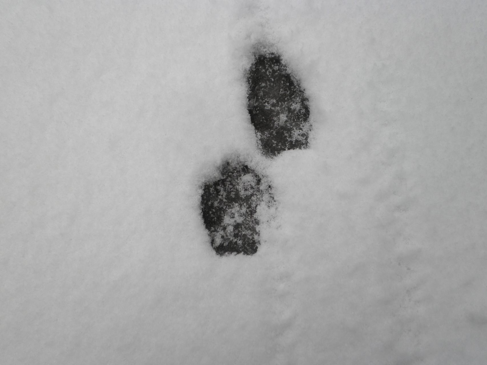 ポーラの足跡