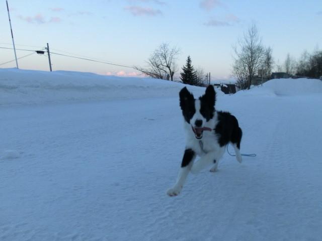 サボ君は19.5kgもう成犬の大きさ