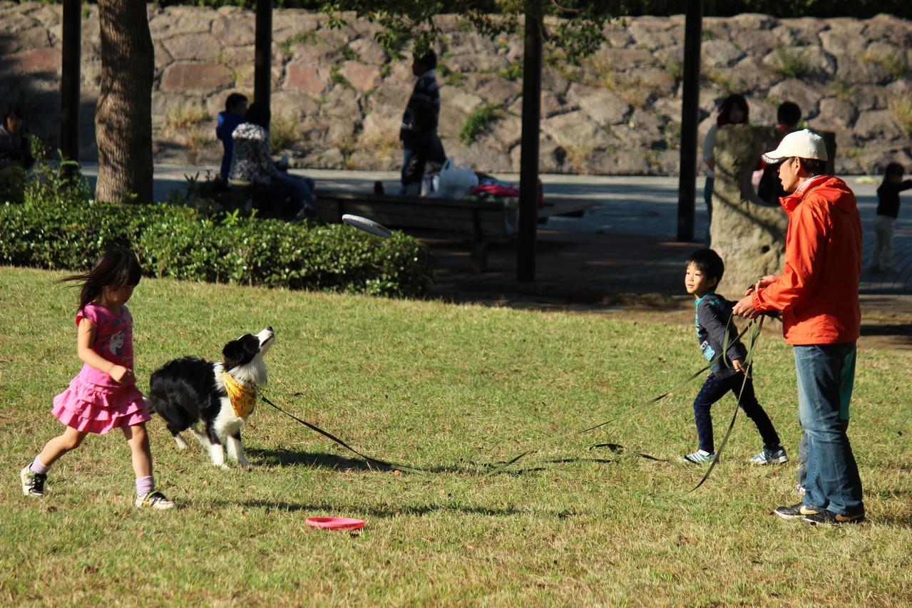 サラはボールキャッチとフリスビー担当