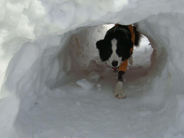 アジリティのトンネルでなく本物のトンネルだ