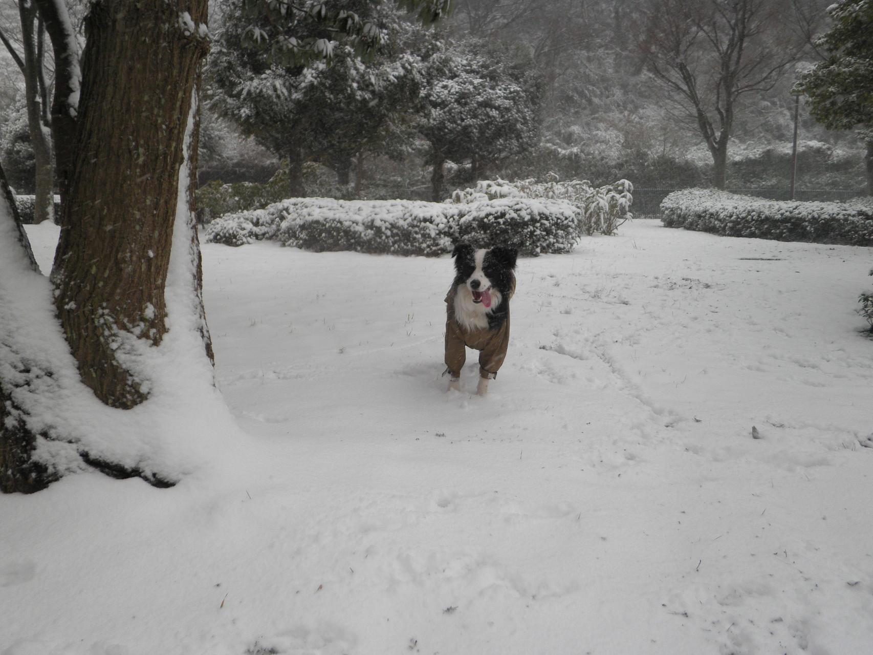 どうしたの?もっと遊ぼう 雪って滑って転んで何でこんなに面白いのかな?