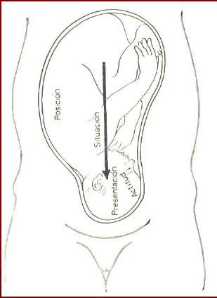 Semiologia obstetrica. Estatica fetal