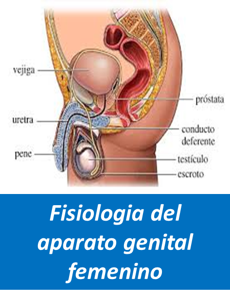 Fisiologia del Aparato Genital Femenino