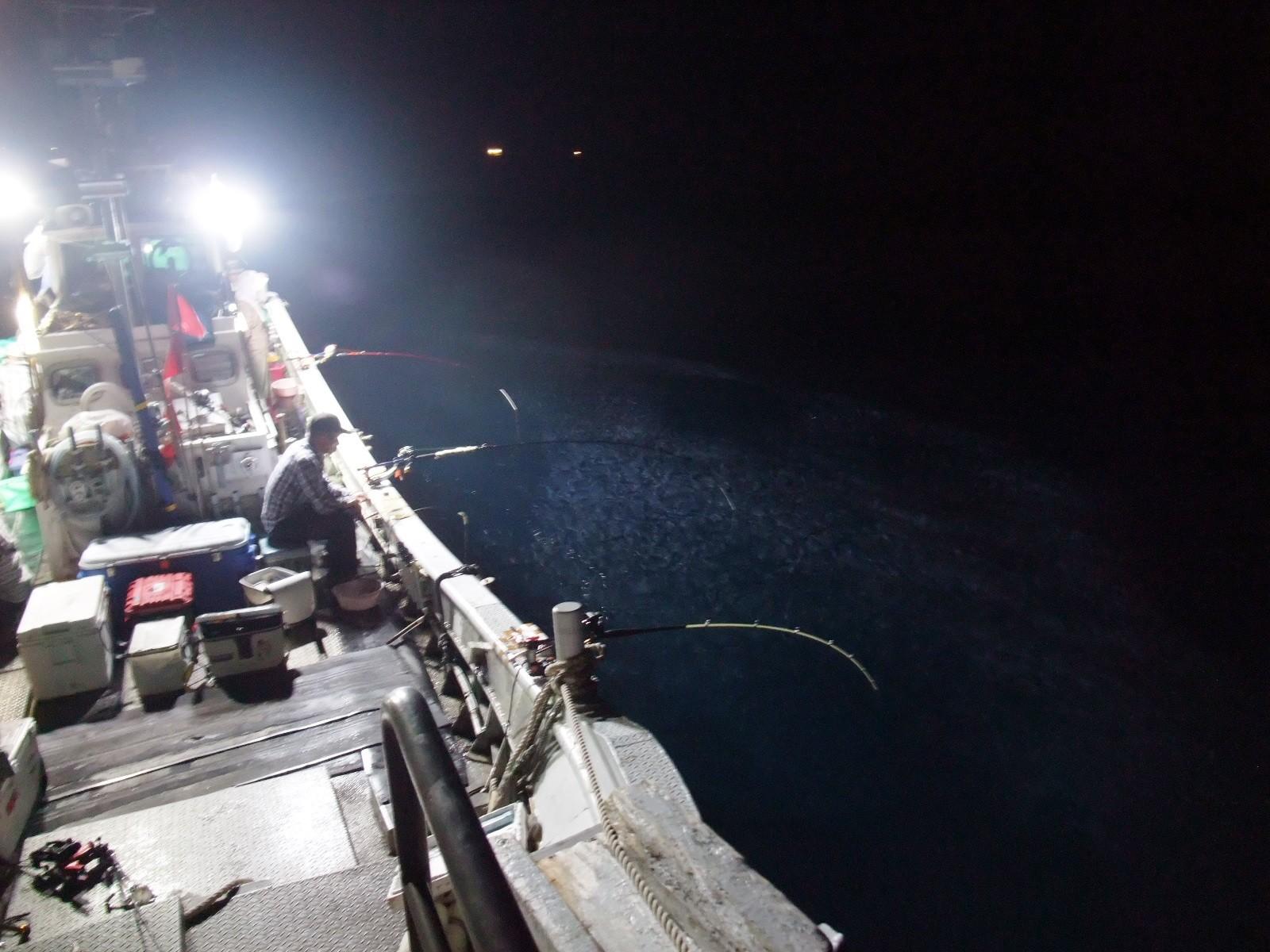 尖閣LED集魚灯に湧くキビナゴの群れ3