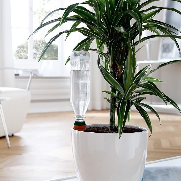 gew chshaus shop pflanzenanzucht gew chshaus fr hbeete. Black Bedroom Furniture Sets. Home Design Ideas