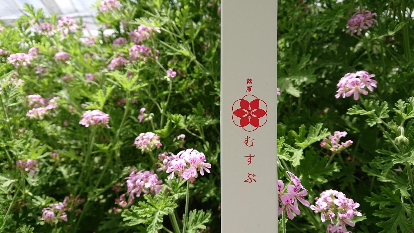 ワヅカnoカオリ nice herb