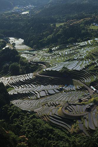 Maruyama Senmaida (One Thousand Rice Paddies)