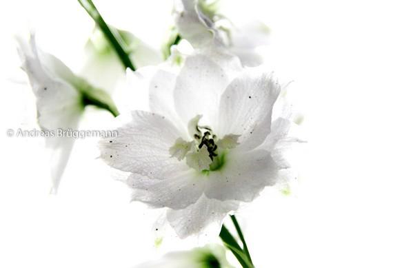 Portrait einer Blume_3