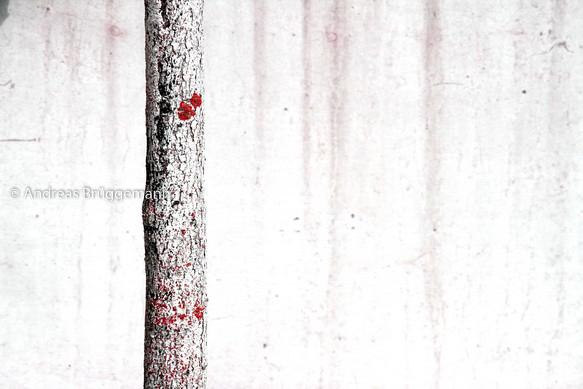 weißer Baum auf weißem Grund