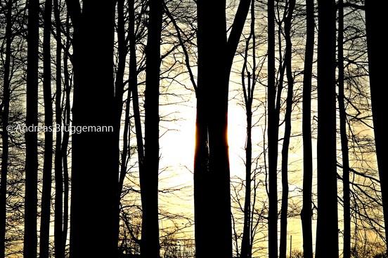 lights between the trees