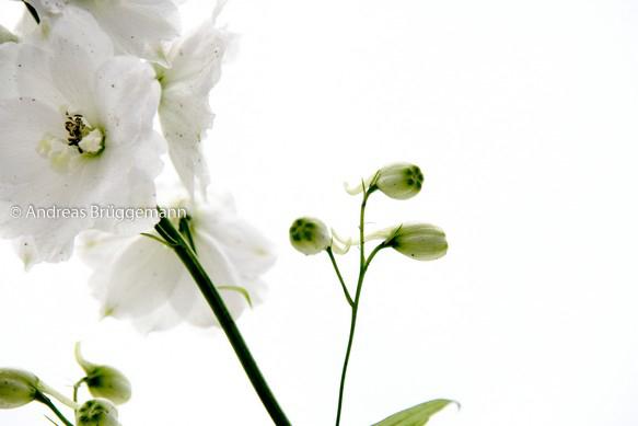 Portrait einer Blume_1