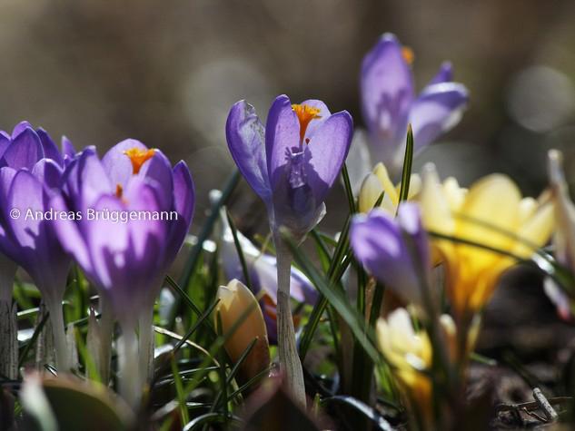 Der Frühling_2