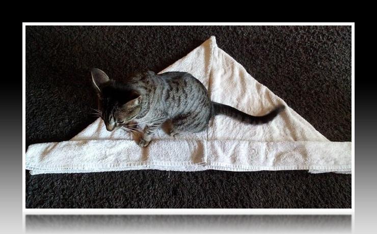 Handtuchfiguren falten Krebs für deine Zimmerdekoration. Origami mal mit Handtüchern. Falte niedliche Figuren, Tiere und andere Origami Motive aus deinen Badetücher oder Gästetücher. Servietten falten mit Handtüchern. Basteln mit Kindern und falten. Katze