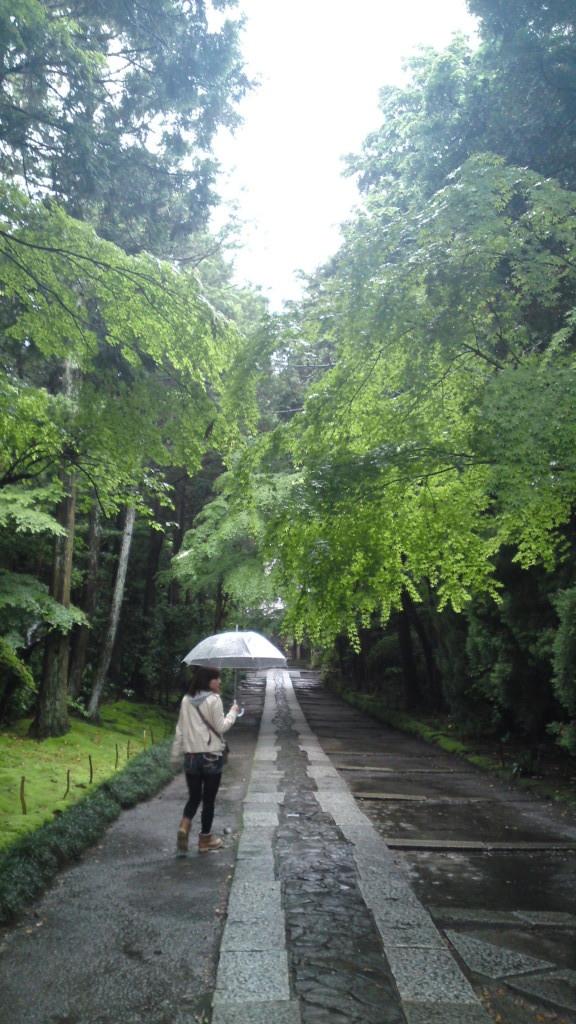 『千とちひろの神隠し』一番最初のシーン。ちひろ達の車が入るのイメージできます??          入り口。 キレイでしたよ~ 葉っぱに雨が当たりキラキラしてました~