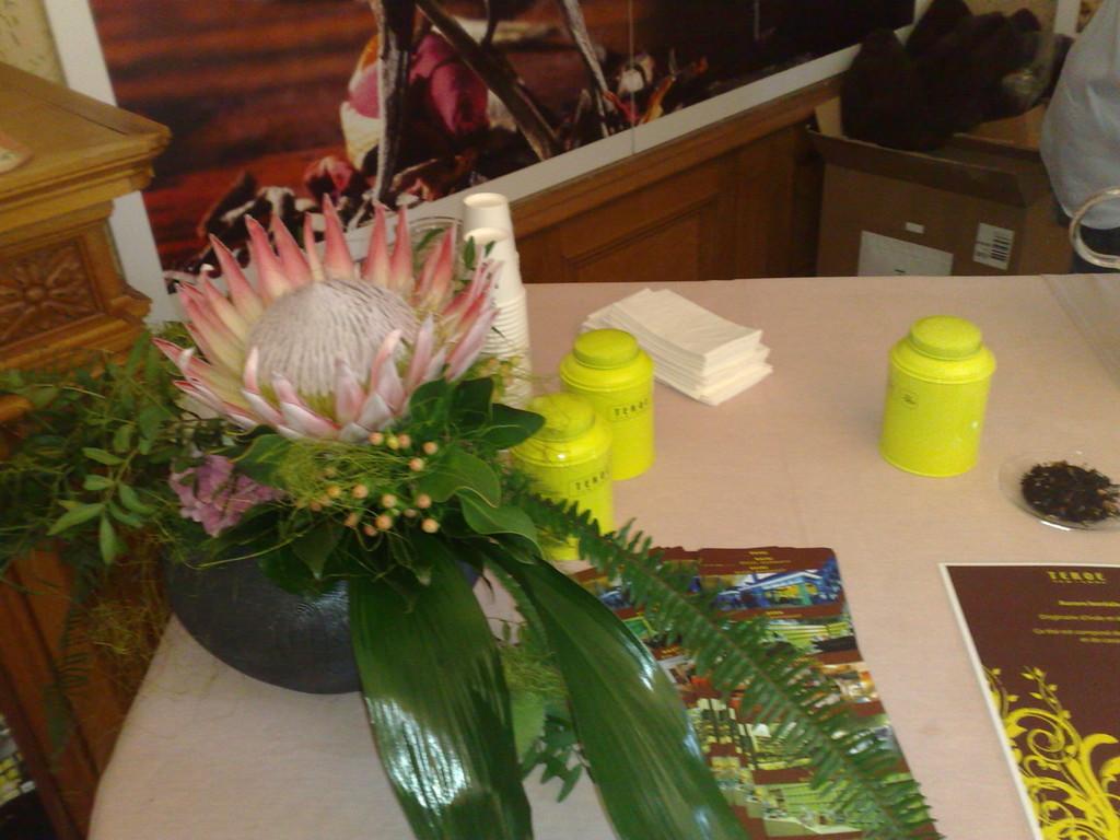 Gros plan sur une protea
