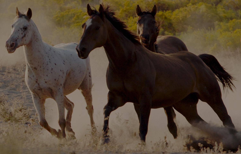 f0d20dddb86d Balade Enterrement de vie de jeune fille Promenades à cheval et poney  Balade à cheval Camargue - Abrivado Ranch - Site de abrivadoranch ! faire  du cheval en ...