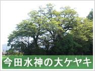今田水神の大ケヤキ