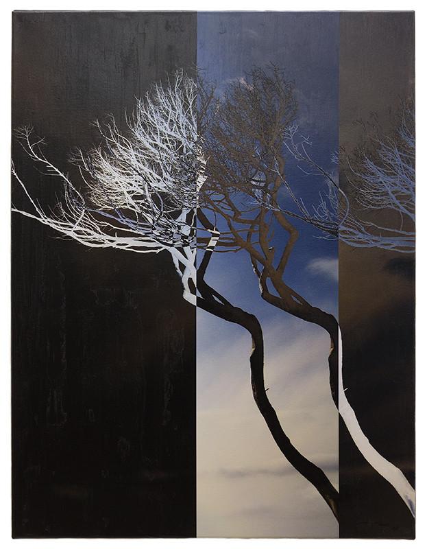 SISTER TREES LIKE DAY LIKE NIGHT (2015, 1/8, 65x85cm, MP0120, Photographie, Inkjet-Pigmentdruck auf Leinwand, Acryl) © Michael Pfenning. Verkauft/Sold: 1 von 8, Verfügbar/Available: 2-8 von 8