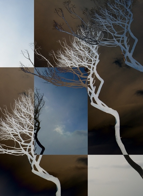 DAYDREAM TREES (2010, MP0307) © Michael Pfenning