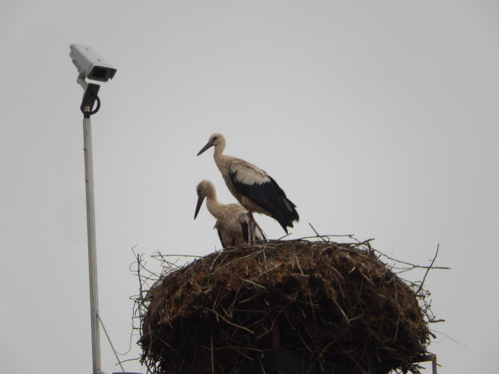 zweisam: seit dem 2. August fehlte einer auf dem Nest