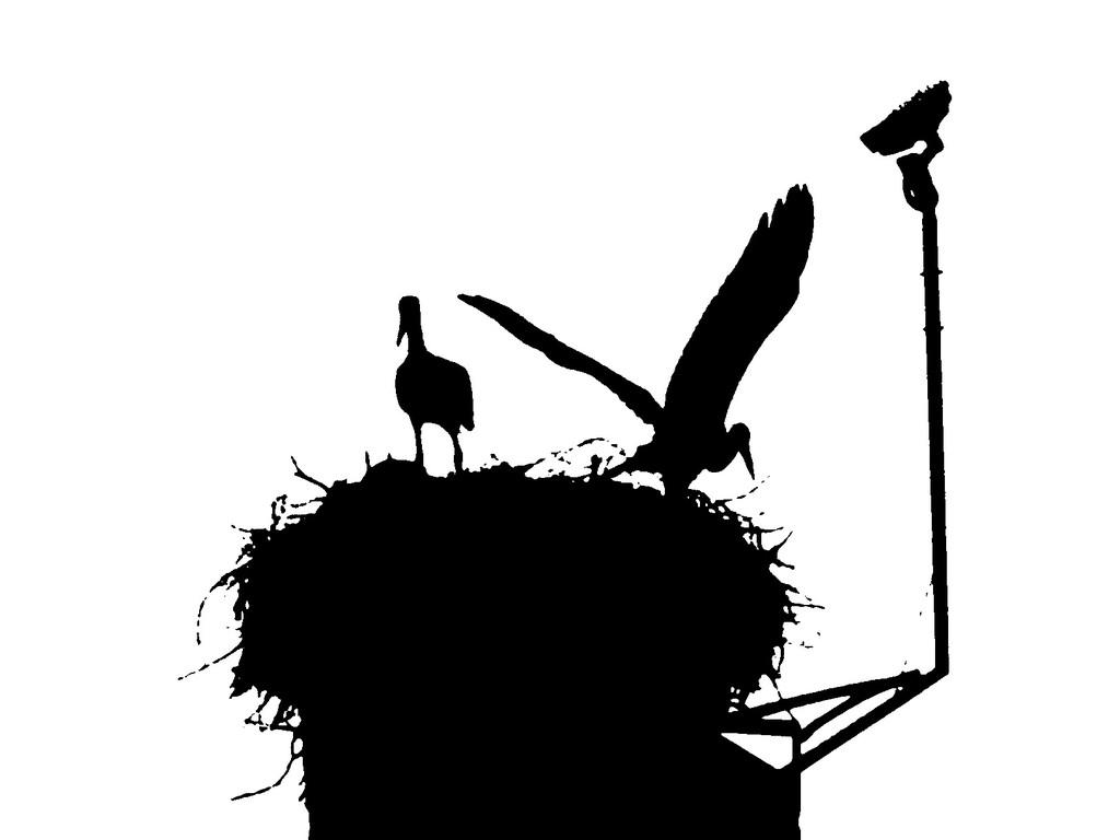 """7. Juli - Kunstbild """"Vogel-V"""""""