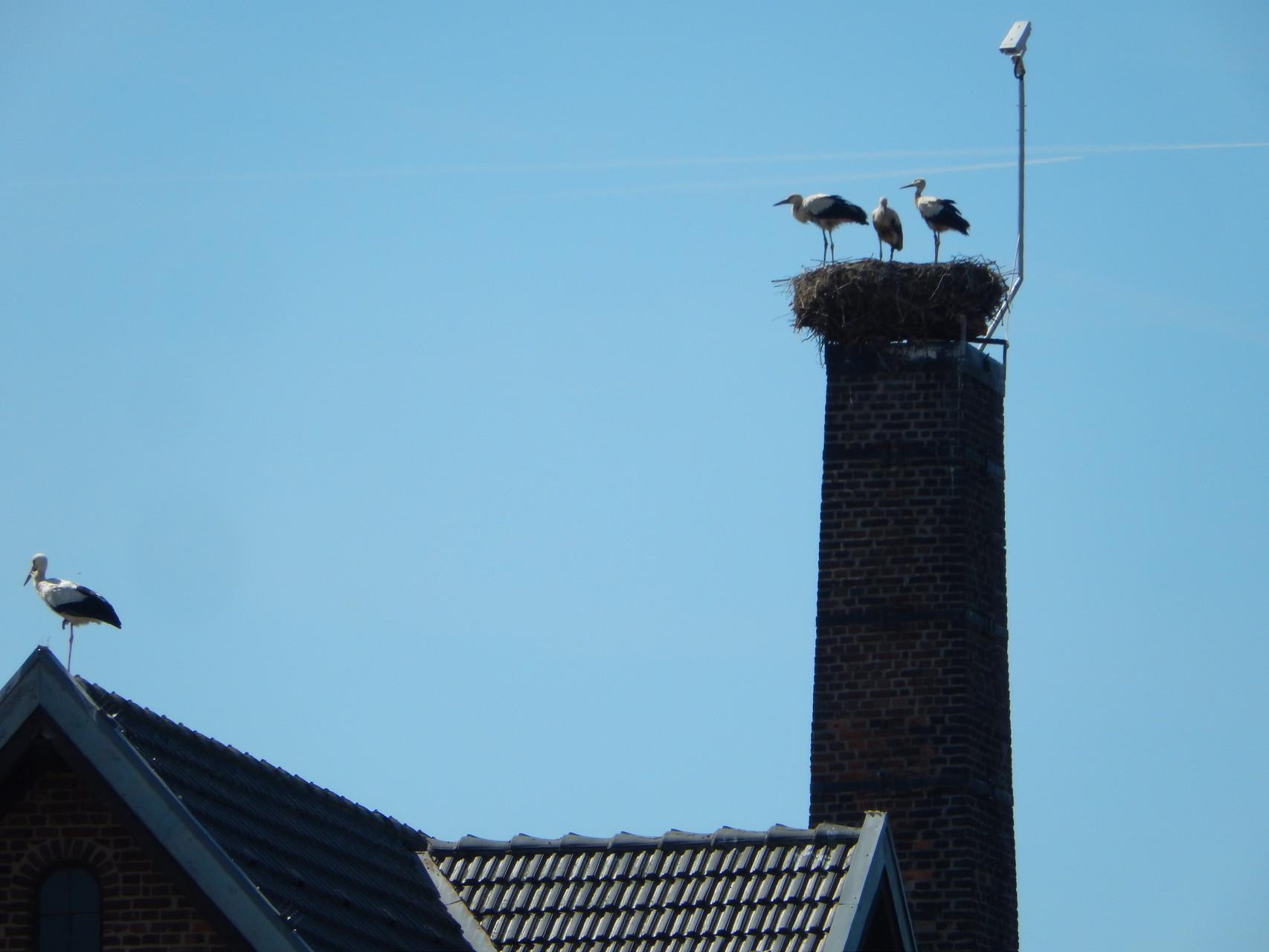 gesellig: 3 im Nest und einer auf dem Dach am 1. August