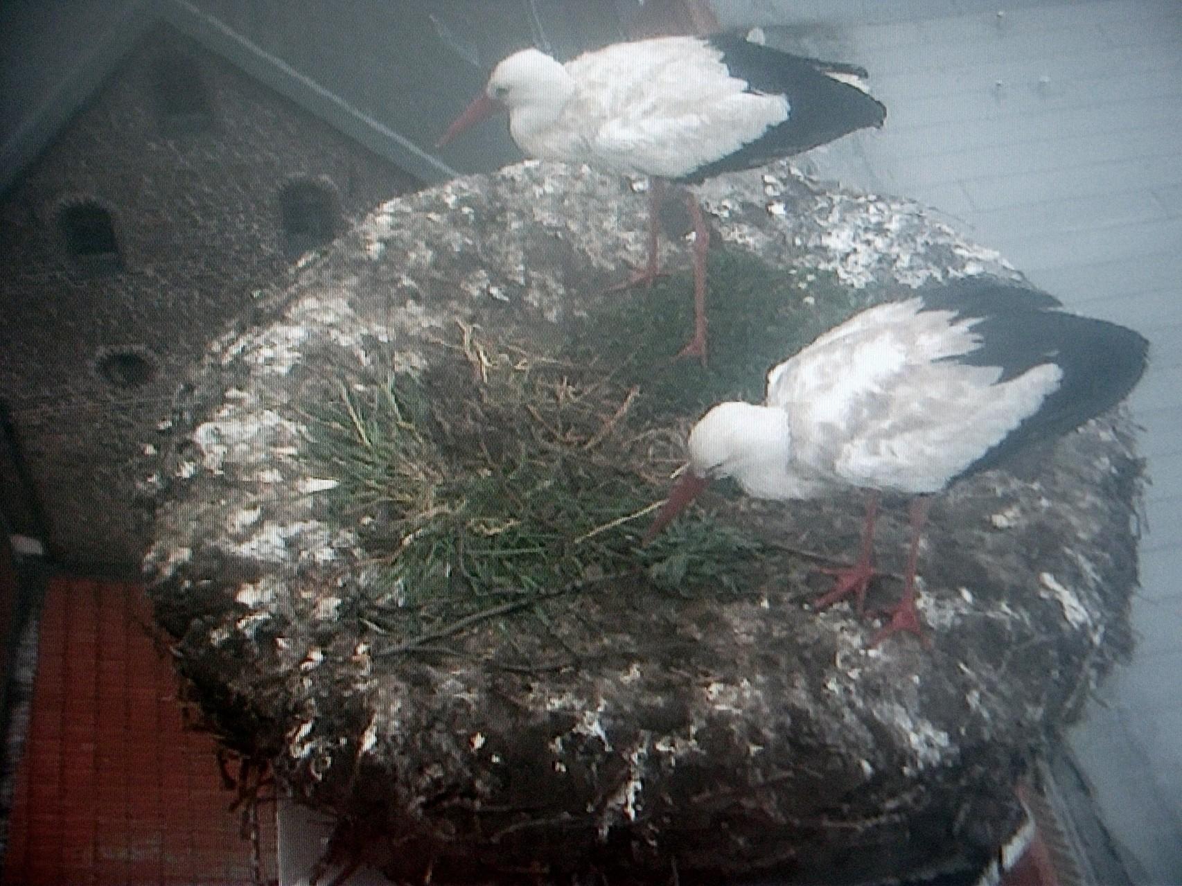 Hillerichs auf mit Gras bewachsenen Nest