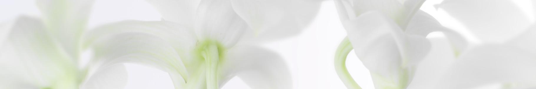 dezente Blumen1