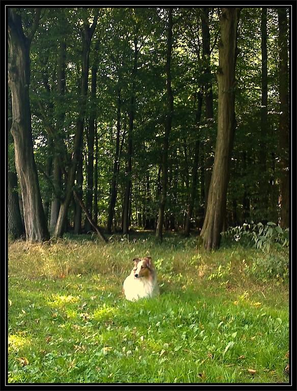"""""""Ich, ganz alleine im Geisterholz."""" ;-) , auch ein schlechtes Telephonphoto :-("""