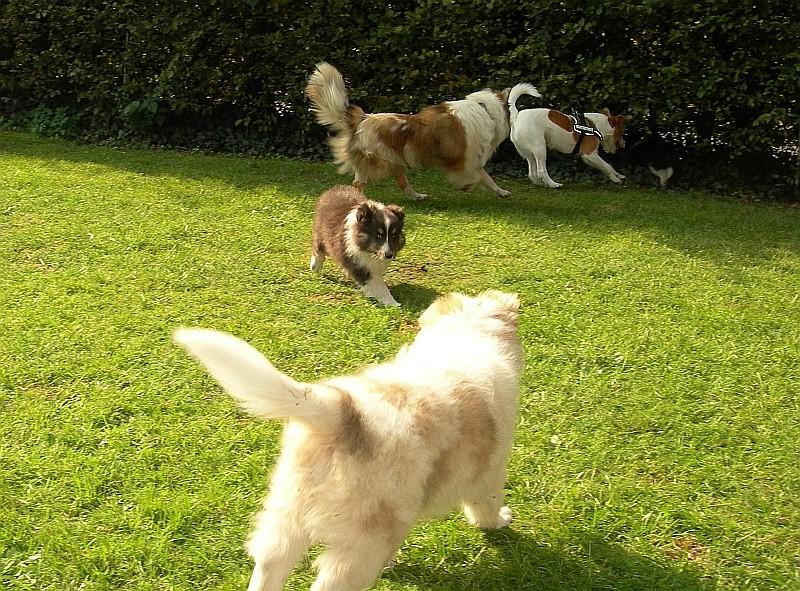 25.09.2011 Ich, mein Bruder Addy, Mami Fenja und Fritz(i) spielen in Dinkalge im Garten, gleicht geht es ab in mein neues Zuhause.